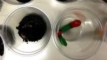 earthworms2 - Copy